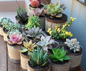 plants and succulents image