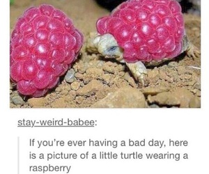 turtle, cute, and raspberry image