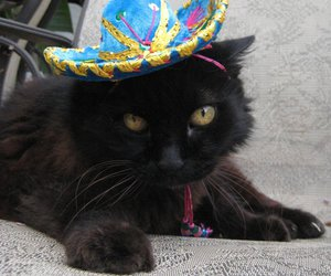 cats, hat, and kittens image
