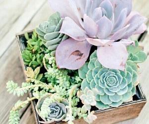 plants, indie, and pastel image