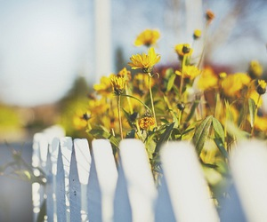 flowers, photography, and summer image