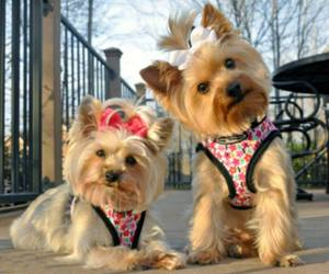 cute animals and dogs image