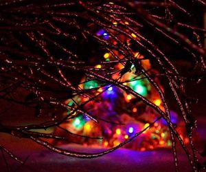 lights and tree image