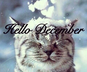 cat, christmas, and december image