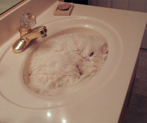 albino, camouflage, and water image