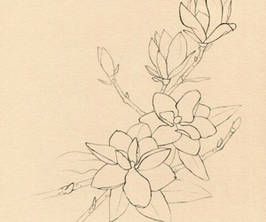 delicate, magnolia, and flower image