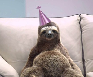 sloth, animal, and birthday image