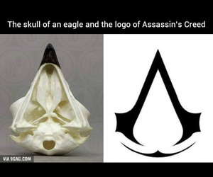 Assassins Creed, eagle, and games image