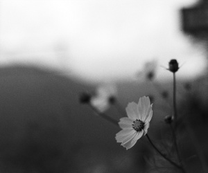 black and white, flowers, and photo image