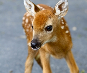 animal, deer, and baby image