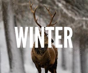 animal, beautiful, and christmas image
