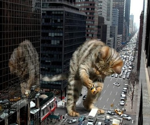 cat, city, and funny image