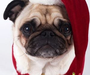 dog, christmas, and pug image