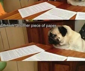 funny, homework, and dog image