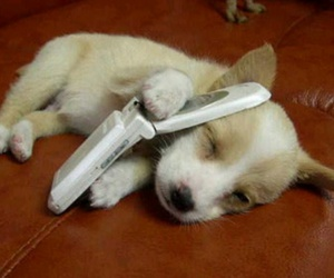 hello, phone, and puppy image