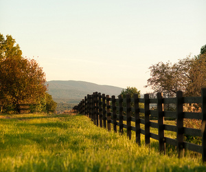 fence and field image