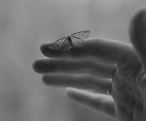butterfly, hand, and black and white image