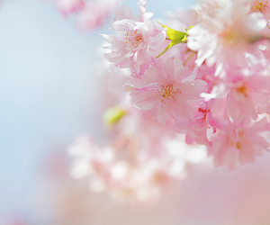 2012, cherry blossoms, and floral image