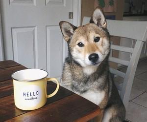 dog, animal, and hello image