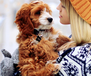 cute, dog, and winter image