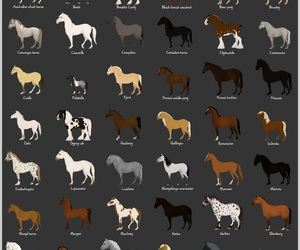 horse and horse breeds image