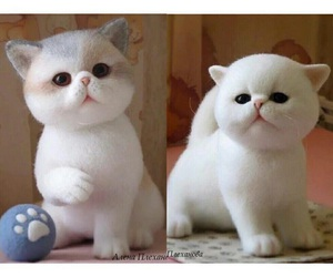 adorable, fluffy, and white image