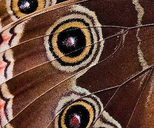 theme, butterfly, and aesthetic image