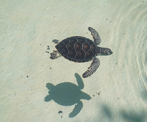 turtle, animal, and sea image