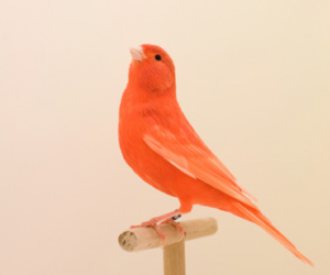 bird, orange, and art image