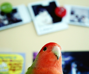 bird, day, and lovebird image