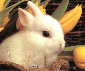 cute bunny, cute, and funny image