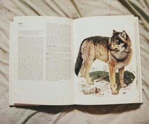 wolf, book, and photography image