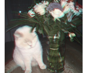 cat, deep, and flowers image