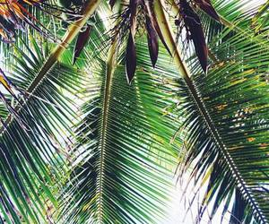 green, palm tree, and nature image