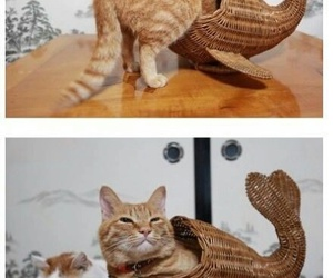 funny, cat, and catfish image
