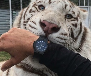 black, tiger, and white image