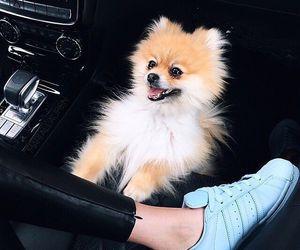 fashion, animal, and dog image