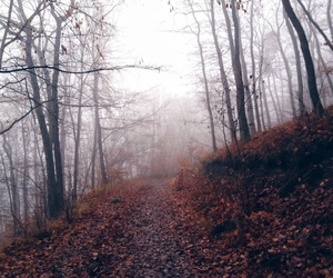 fall, nature, and foggyday image