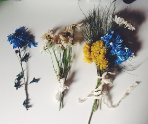 blue, daisy, and flowers image