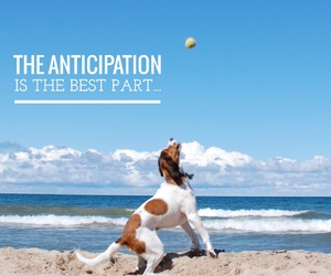 anticipation, beach, and dog image