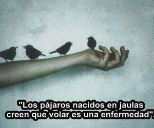 frases, bird, and fly image
