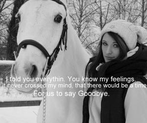 horse, memory, and miss you image