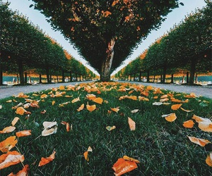 autumn, grass, and fall image