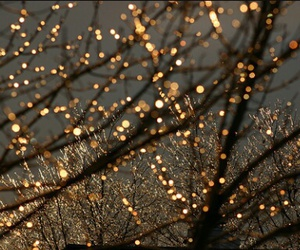 lights, tree, and cute image