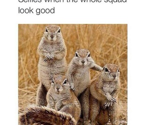 squad and funny image