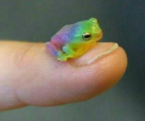 amphibian, animals, and frog image