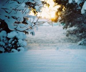 flickr, nature, and winter image