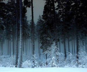 snow and forest image
