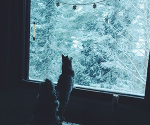 cat, christmas, and cozy image