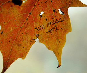 autumn, leaf, and written image